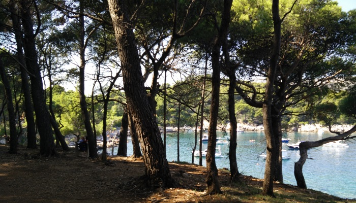 a picture of Lokrum with a sea view through the trees