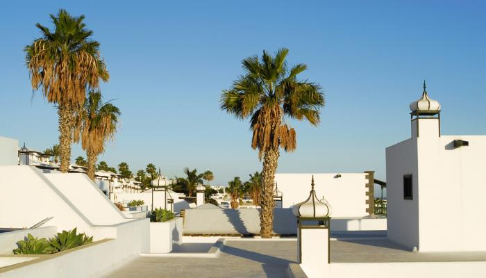picture of palm trees in Lanzarote